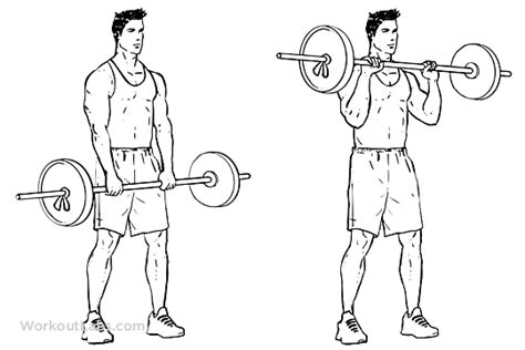 Standing Reverse Barbell Curls – WorkoutLabs Exercise Guide