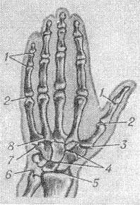 Brush building the muscles of the joints of the hand