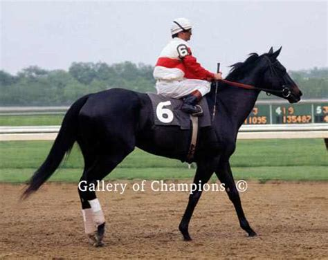 Ruffian 1975 Mother Goose Stakes 535 | Gallery of Champions