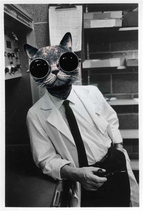 Cat Scientists of the 1960's   SheWalksSoftly
