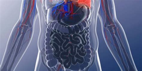 What is Bowel Obstruction? | Other Diseases